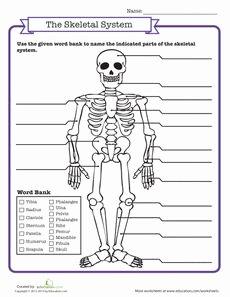 The Nature Of Science Worksheet Unique Free Internal organs Worksheet