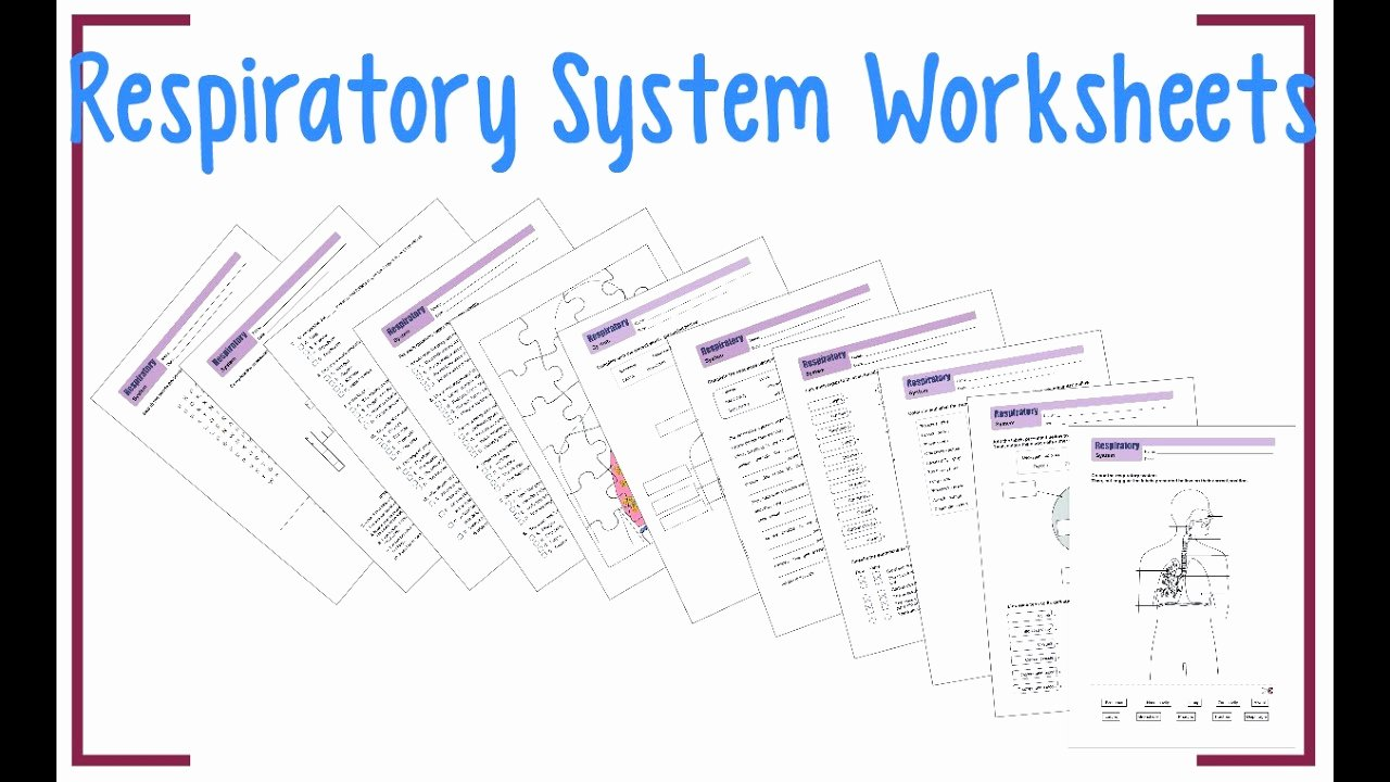 The Respiratory System Worksheet Luxury Respiratory System Worksheets