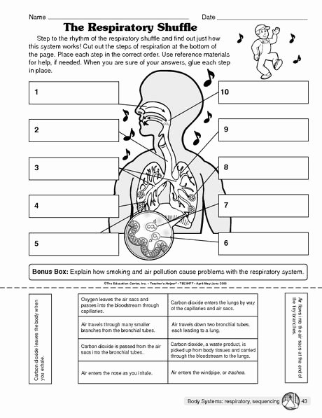 The Respiratory System Worksheet New the Respiratory Shuffle the Mailbox Fruit