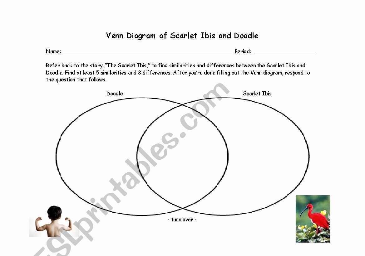 The Scarlet Ibis Worksheet Answers Elegant English Worksheets Scarlet Ibis Venn Diagram