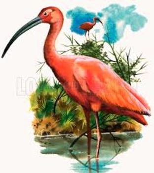 The Scarlet Ibis Worksheet Awesome the Scarlet Ibis Scavenger Hunt for Information by Jim