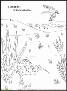 The Scarlet Ibis Worksheet Unique Coloring On Pinterest