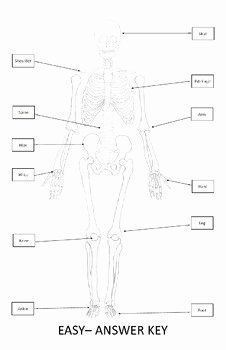 The Skeletal System Worksheet Beautiful Skeletal System Poster Cut and Paste Bones Of the