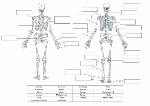 The Skeletal System Worksheet Best Of Skeletal System Worksheet and Answers by Hayleyanne20