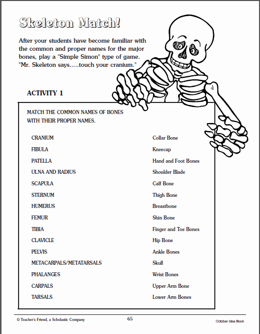The Skeletal System Worksheet Elegant Skeletal System