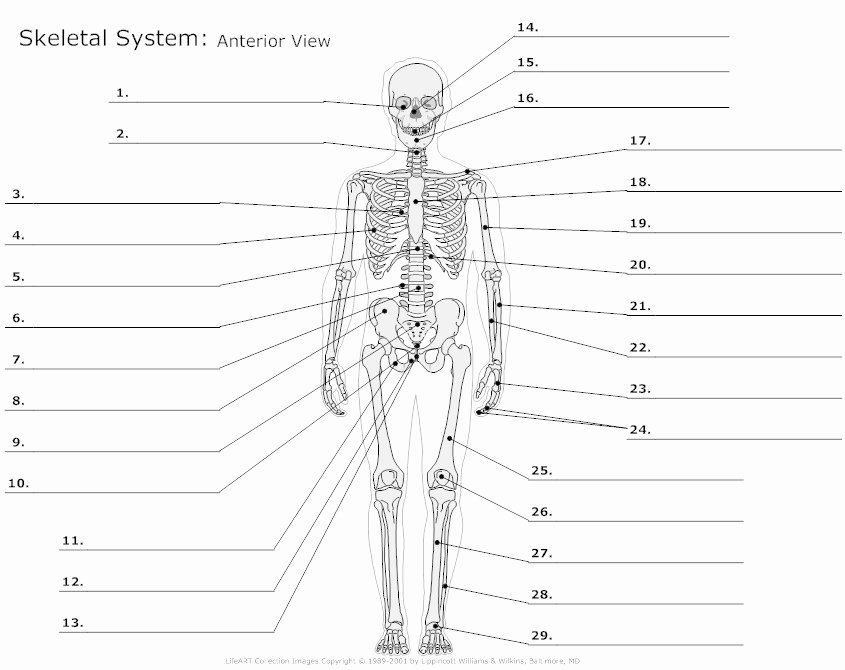 The Skeletal System Worksheet Fresh 13 Best Of Skeleton Bones Labeled Worksheets