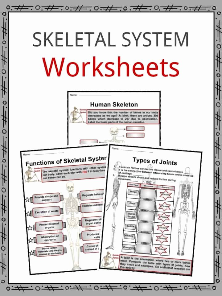 The Skeletal System Worksheet Fresh the Skeletal System Facts Worksheets Bone Types