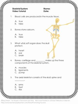 The Skeletal System Worksheet New Free Download Skeletal System Worksheet Skeletal System