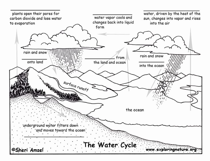 The Water Cycle Worksheet Answers Best Of Cycles In Nature Worksheet