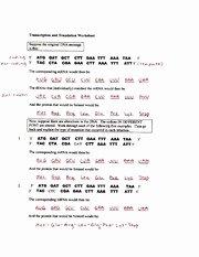 Transcription and Translation Practice Worksheet Beautiful Practice 2 Key Transcription and Translation Worksheet