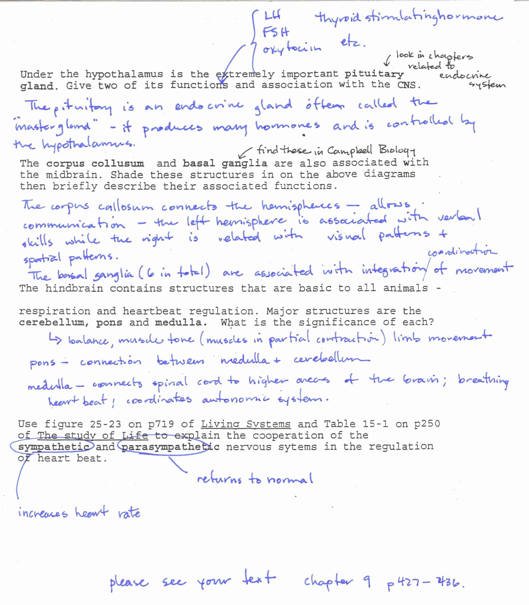 Transcription and Translation Practice Worksheet Luxury Transcription and Translation Practice Worksheet Answer