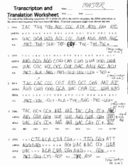 Transcription and Translation Practice Worksheet Luxury Transcription and Translation Worksheet Answers