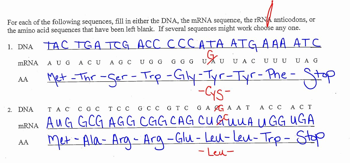 Transcription and Translation Worksheet Answers Beautiful Ec Honors Biology April 2013