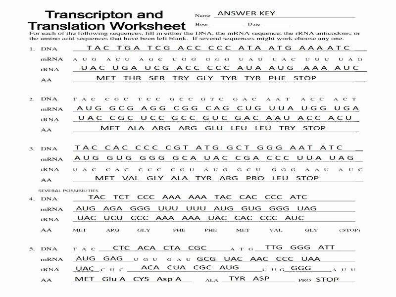 Transcription and Translation Worksheet Answers Fresh Transcription and Translation Worksheet Answers
