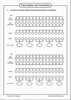 Transcription and Translation Worksheet Lovely Transcription and Translation by Good Science Worksheets