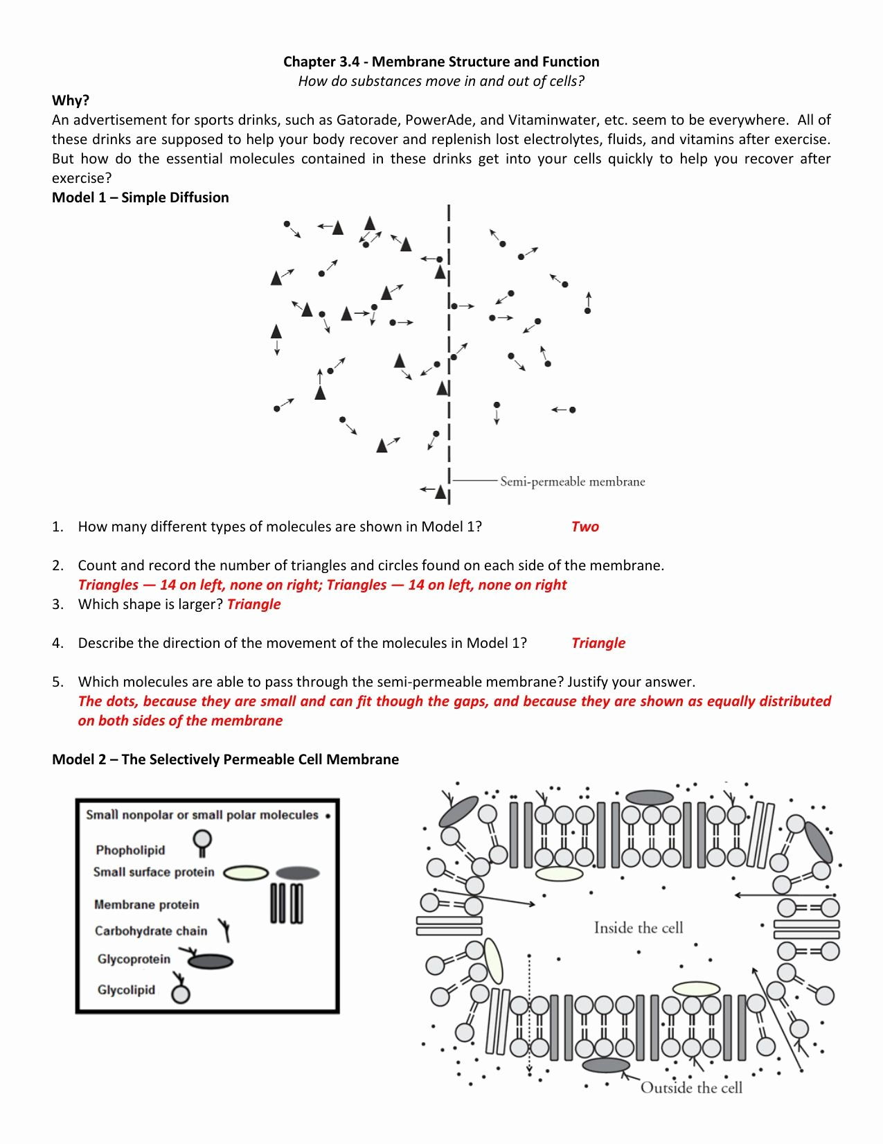 Transport In Cells Worksheet Awesome Diffusion Worksheet Answers