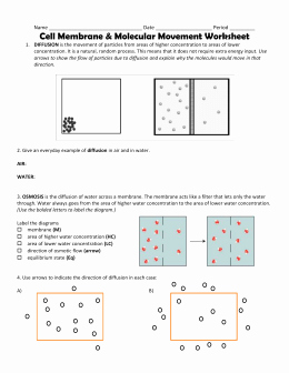 Transport In Cells Worksheet Best Of Cell Transport Worksheet