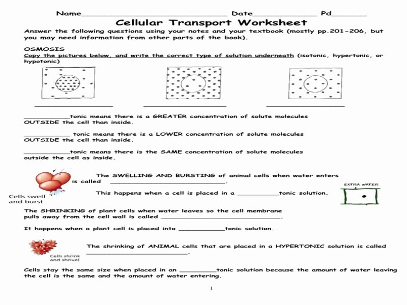 Transport In Cells Worksheet Fresh Cell Membrane & tonicity Worksheet Free Printable Worksheets