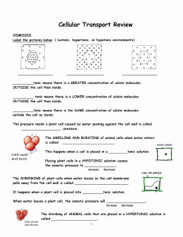 Transport In Cells Worksheet Fresh Cellular Transport Worksheet 1 Kyoussef Mci