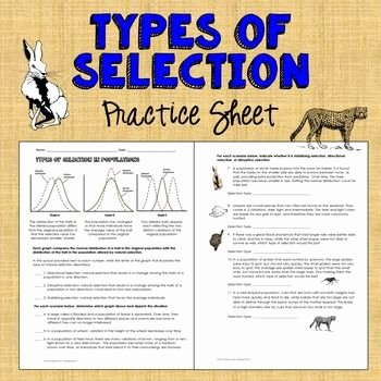 Types Of Evolution Worksheet Beautiful Types Of Natural Selection Practice