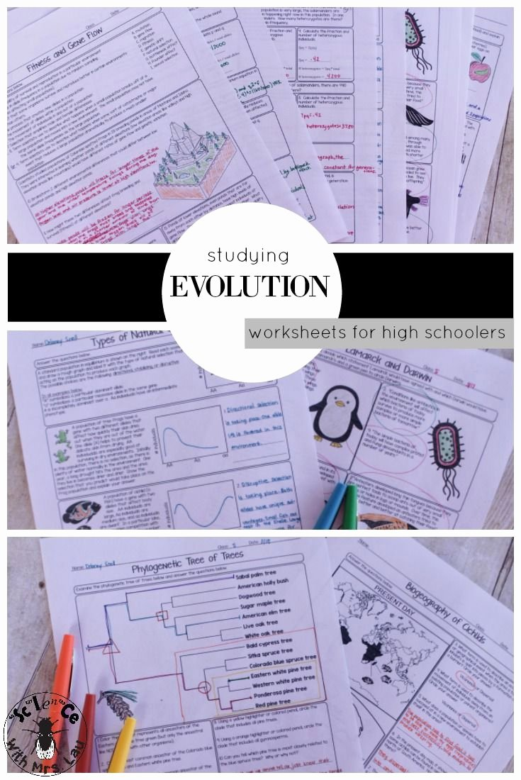 Types Of Evolution Worksheet Fresh 17 Best Images About High School Science with Mrs Lau On
