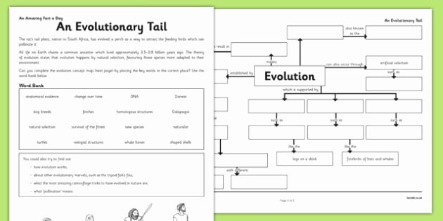 Types Of Evolution Worksheet Fresh An Evolutionary Tail Worksheet Activity Sheet Evolution