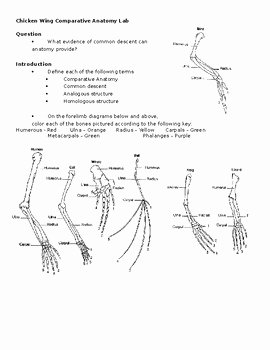 Types Of Evolution Worksheet Fresh Parative Anatomy Chicken Wing and Evidence Of Evolution