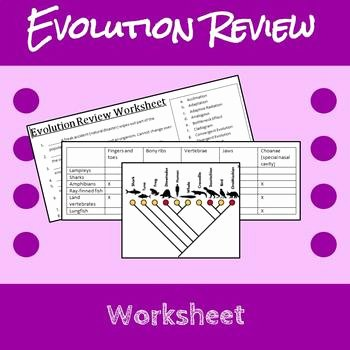 Types Of Evolution Worksheet Inspirational Evolution Review Worksheet by Erin Frankson