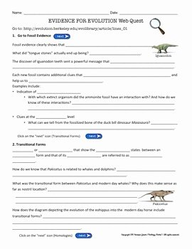 Types Of Evolution Worksheet Lovely Evidence for Evolution Webquest by Biology Roots