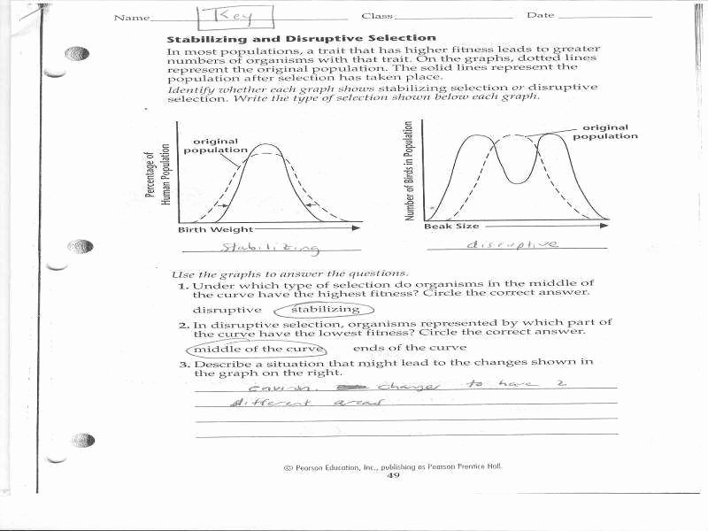 Types Of Evolution Worksheet New Evolution by Natural Selection Worksheet