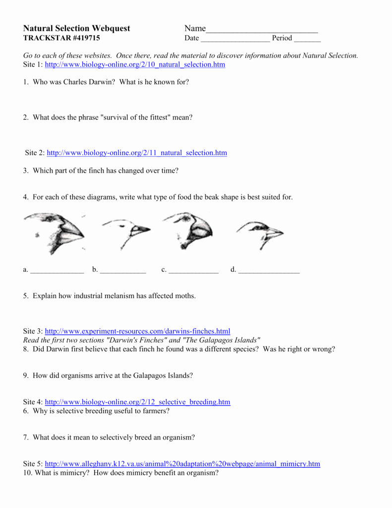 Types Of Natural Selection Worksheet Elegant Natural Selection Webquest