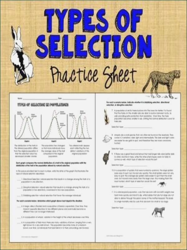 Types Of Natural Selection Worksheet Elegant Natural Selection Worksheet