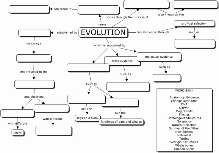 Types Of Natural Selection Worksheet Fresh Evolution Concept Map Great Evoltuion Worksheet