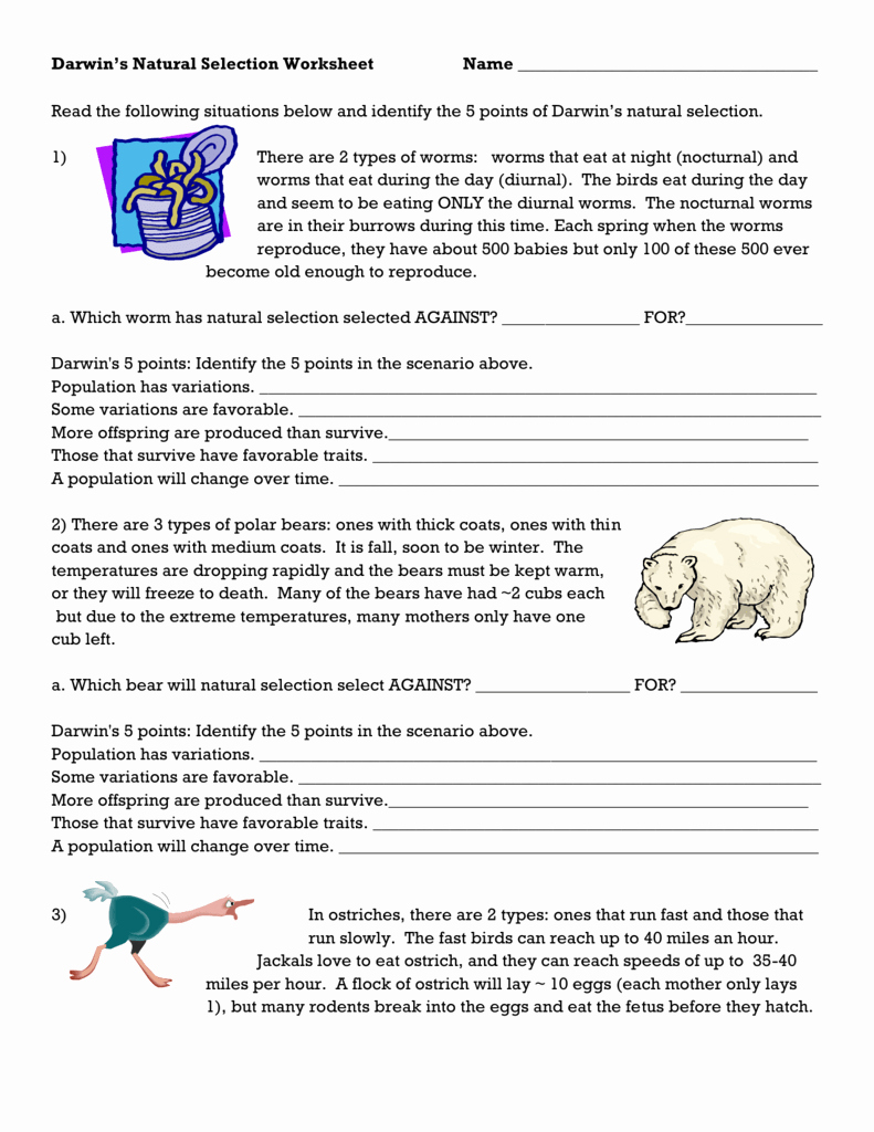Types Of Natural Selection Worksheet Unique Darwin S Natural Selection Worksheets Answer Key