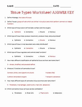 Types Of Tissues Worksheet Best Of Tissue Types Worksheet by Simply Stem