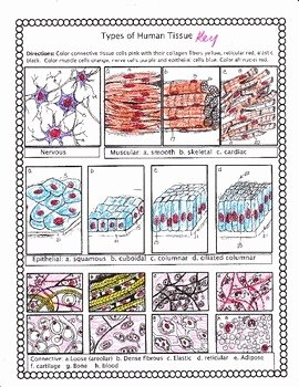 Types Of Tissues Worksheet Fresh Histology Types Of Human Tissue by Biology Buff