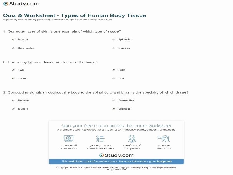 Types Of Tissues Worksheet Inspirational Body Tissues Anatomy and Physiology Chapter 3 Cells and