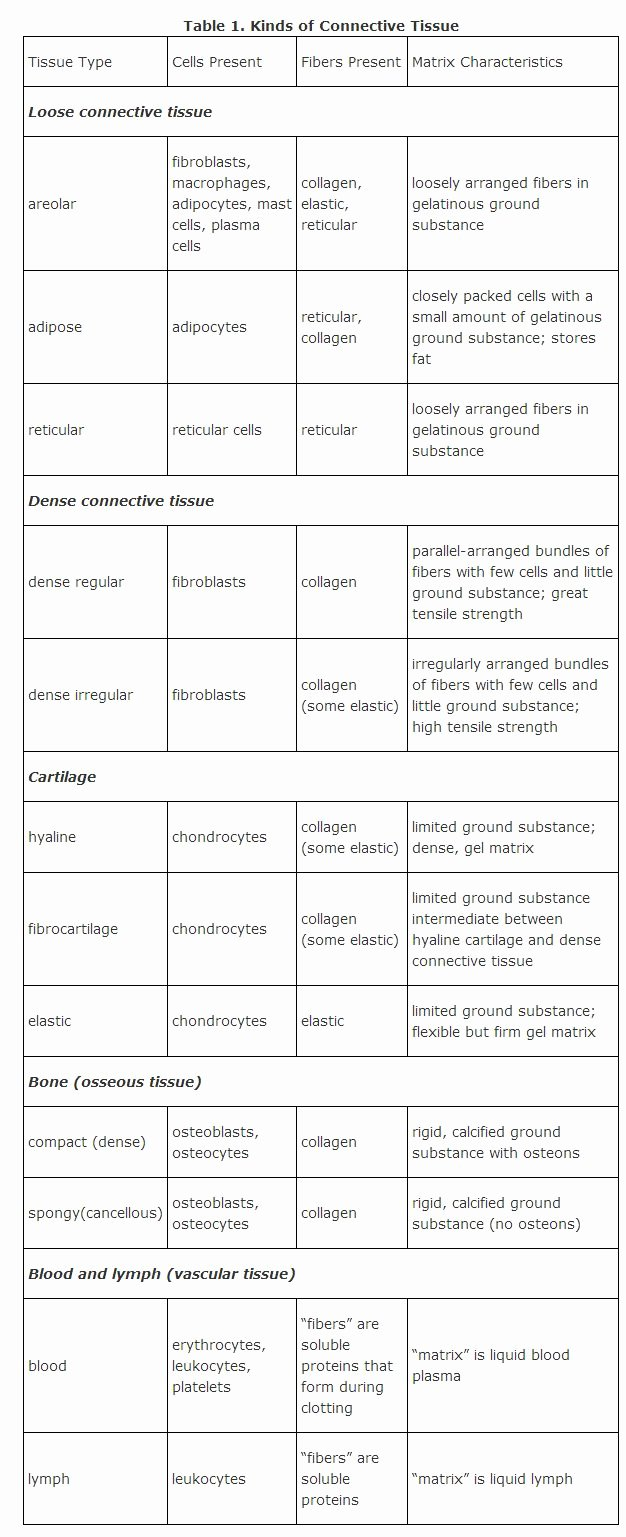 Types Of Tissues Worksheet New Connective Tissue