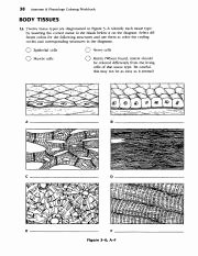 Types Of Tissues Worksheet New Tissue Review Worksheets Pdf 38 Anatomy Physiology
