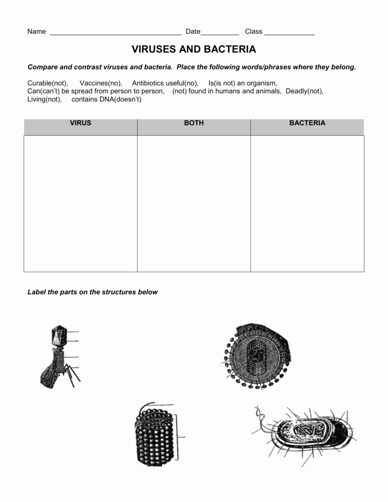 Virus and Bacteria Worksheet Answers New Worksheet Virus and Bacteria Worksheet Grass Fedjp
