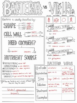 Virus and Bacteria Worksheet Inspirational Bacteria Vs Virus Biology Sketch Notes by Creativity