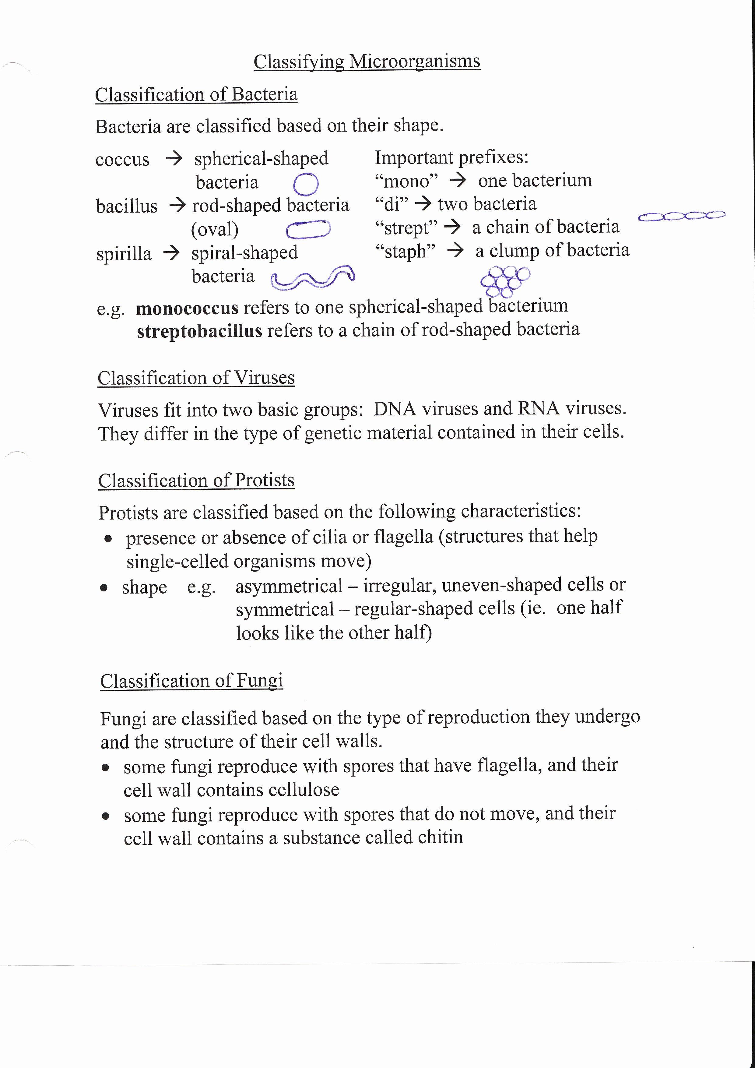 Virus and Bacteria Worksheet Key Fresh Worksheet Virus and Bacteria Worksheet Grass Fedjp