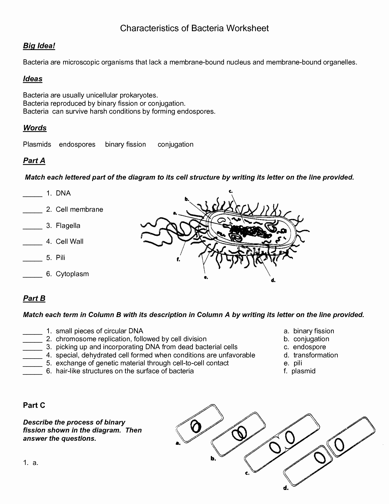 Viruses and Bacteria Worksheet Beautiful 14 Best Of Viruses and Bacteria Worksheets