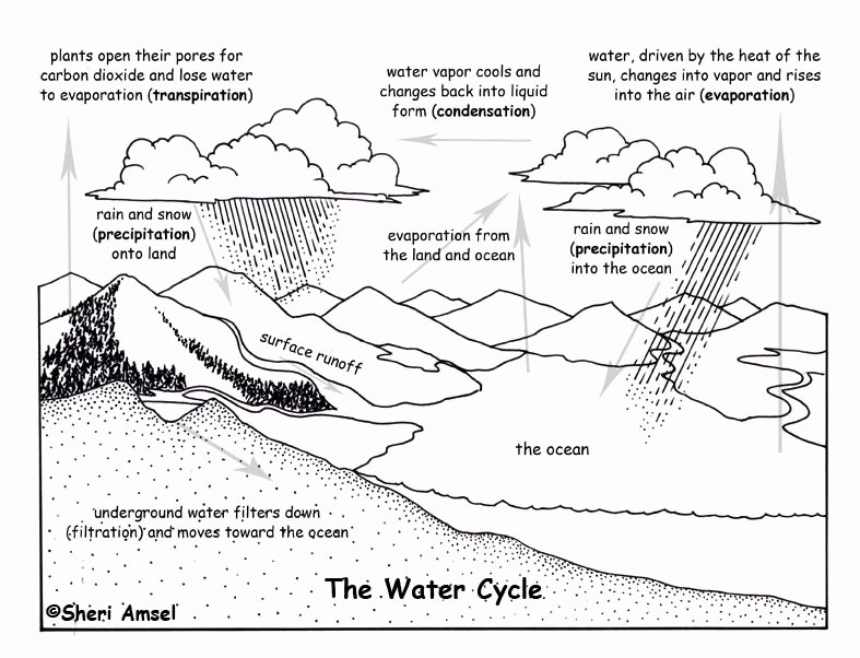 Water Cycle Worksheet Pdf Beautiful Water Cycle